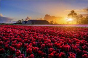 Nabídka fotocest aneb fotografický workshop Rozkvetlé jarní Holandsko