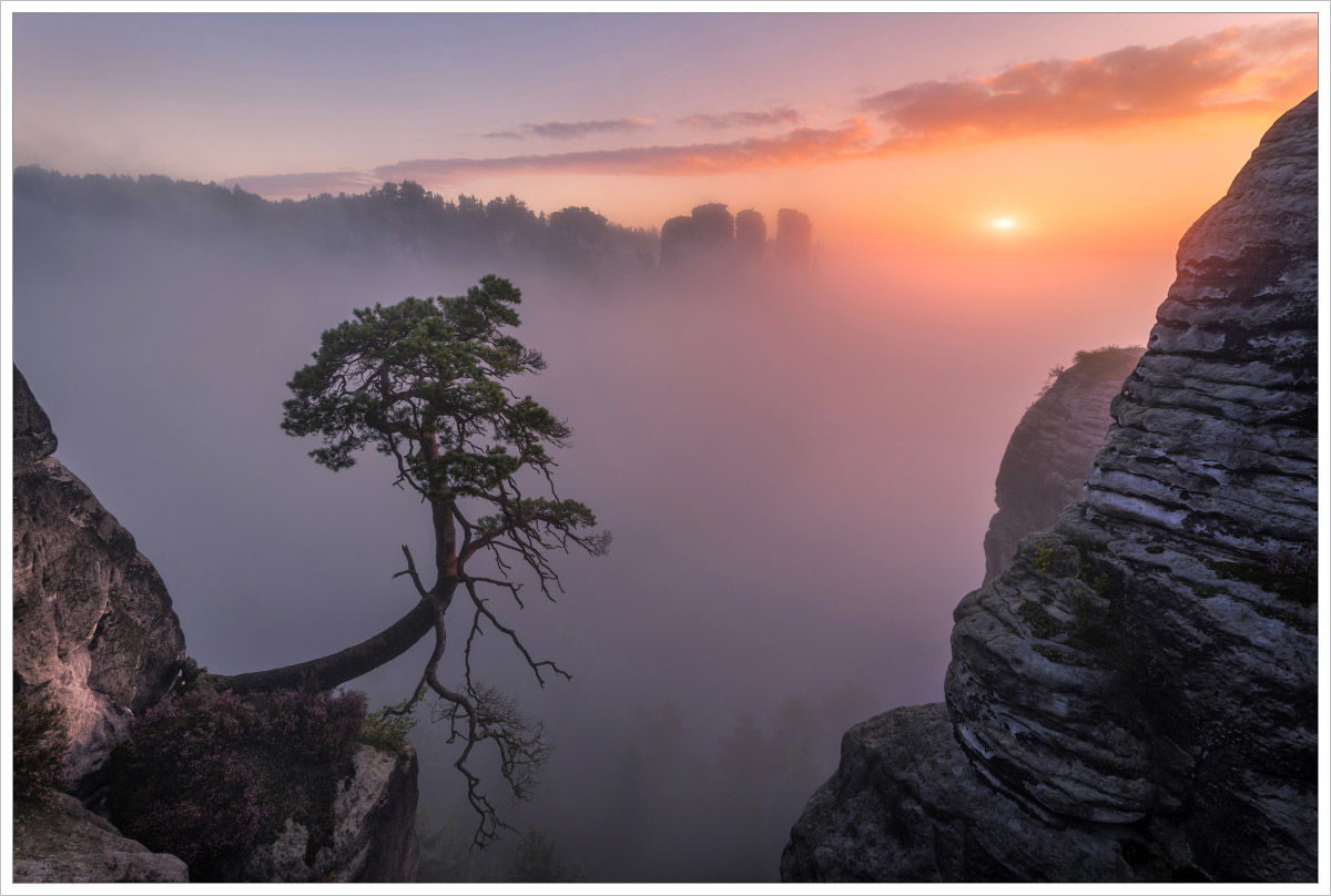 Borovice asklaní věže - fotografický workshop Podzimní Českosaské Švýcarsko