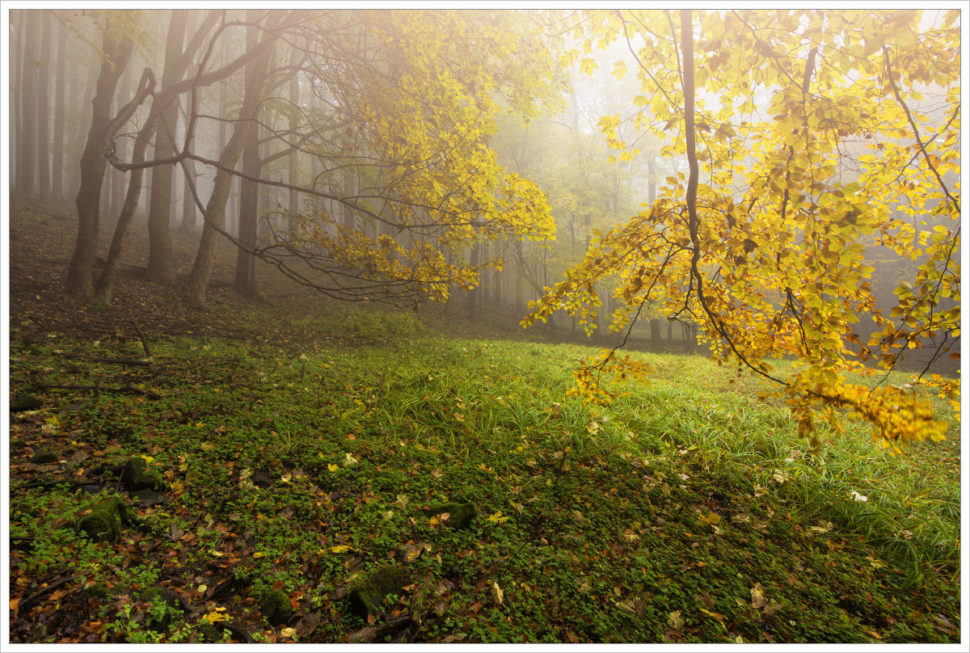 Mlhavý les - fotografický workshop Podzimní Českosaské Švýcarsko