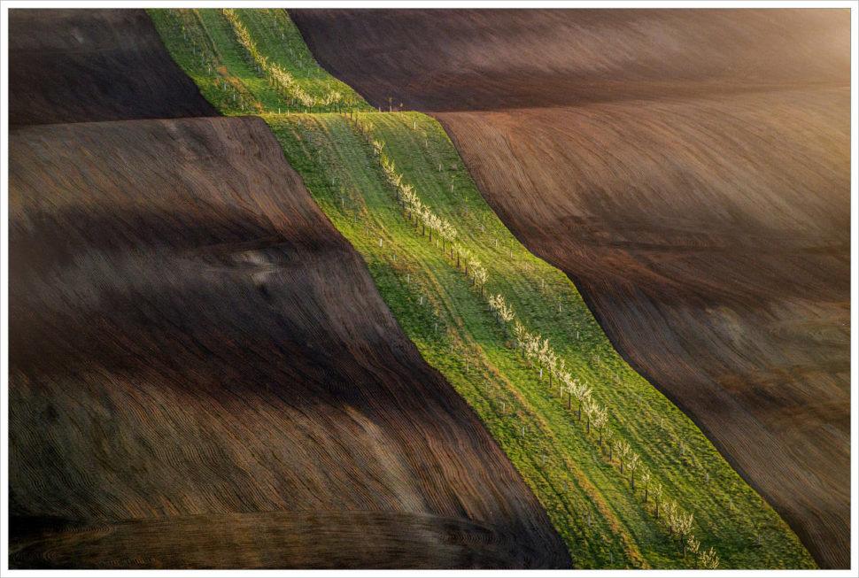 Jarní stuha namoravských polích - fotografický workshop Romanticky zvlněná Jižní Morava