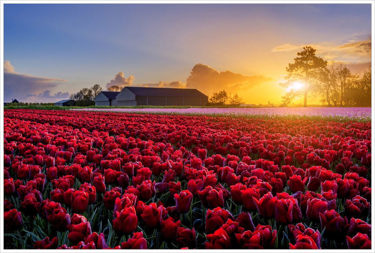 Holandský venkov je velice fotogenický - fotografický workshop Rozkvetlé jarní Holandsko
