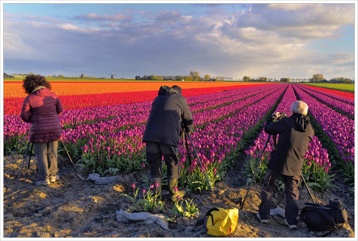 Různobarevná tulipánová pole se fotí snadno - fotografický workshop Rozkvetlé jarní Holandsko