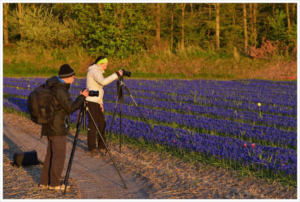 Na květoucí pole narážíme během fotoworkshopu nakaždém kroku - fotografický workshop Rozkvetlé jarní Holandsko