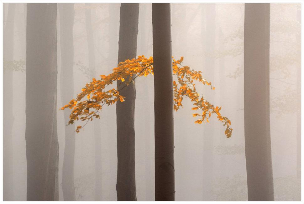 Detail mlžného lesa - fotografický workshop Podzimní Českosaské Švýcarsko