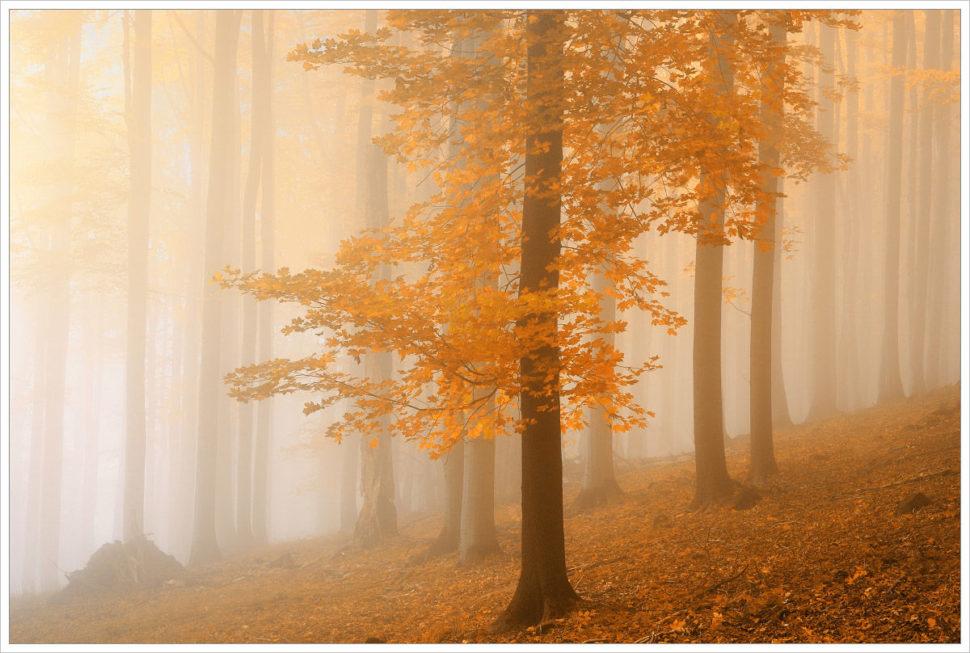 Mlhavý bukový les na Studenci - fotografický workshop Podzimní Českosaské Švýcarsko