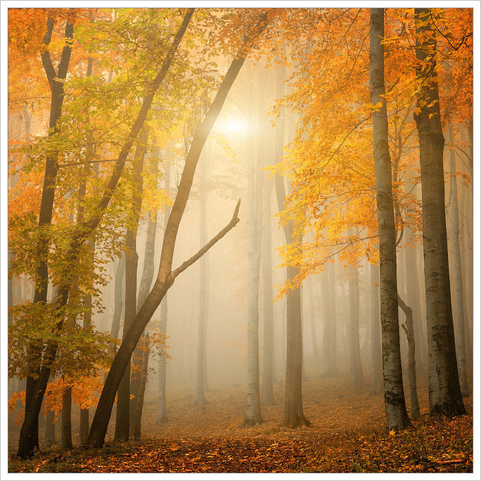 Barvy mlhavého lesa - fotografický workshop Podzimní Českosaské Švýcarsko