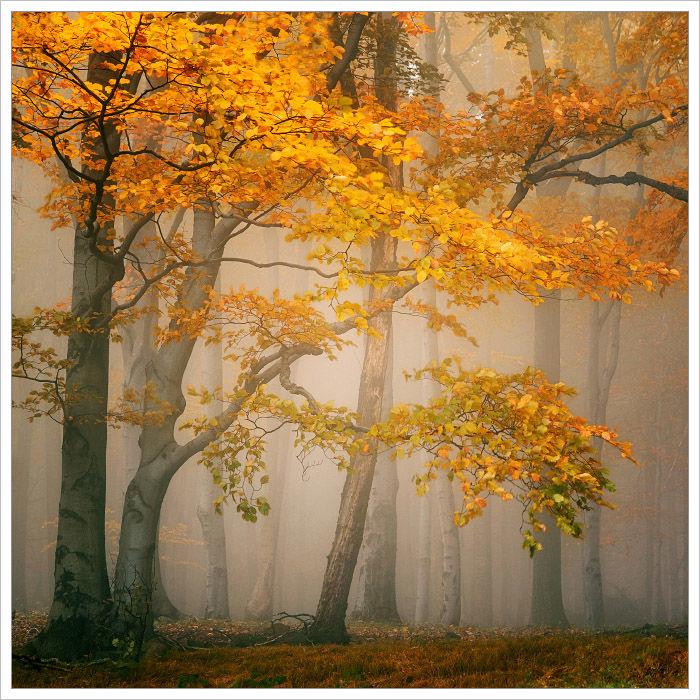 Romantika podzimního lesu - fotografický workshop Podzimní Českosaské Švýcarsko