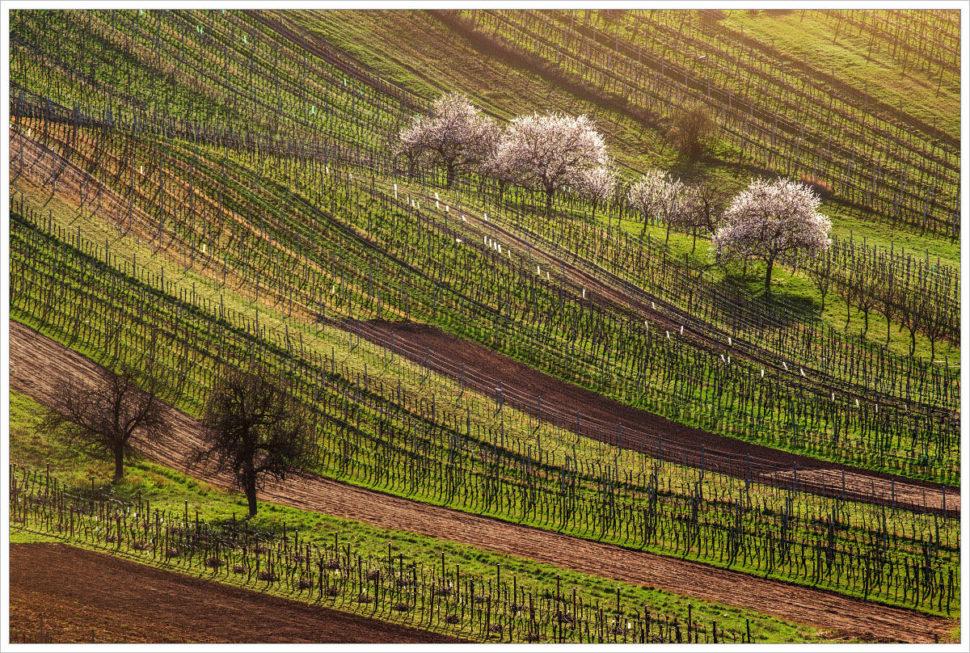 Vinohrady azace vinohrady - fotografický workshop Romanticky zvlněná Jižní Morava