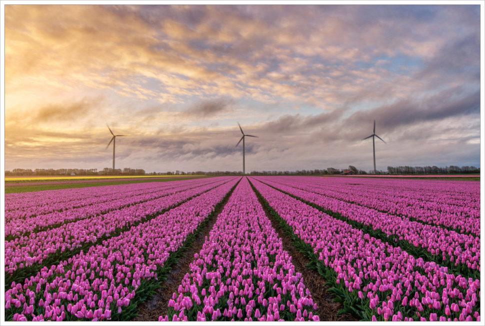 Tulipánová pole azdroje energie - fotografický workshop Rozkvetlé jarní Holandsko