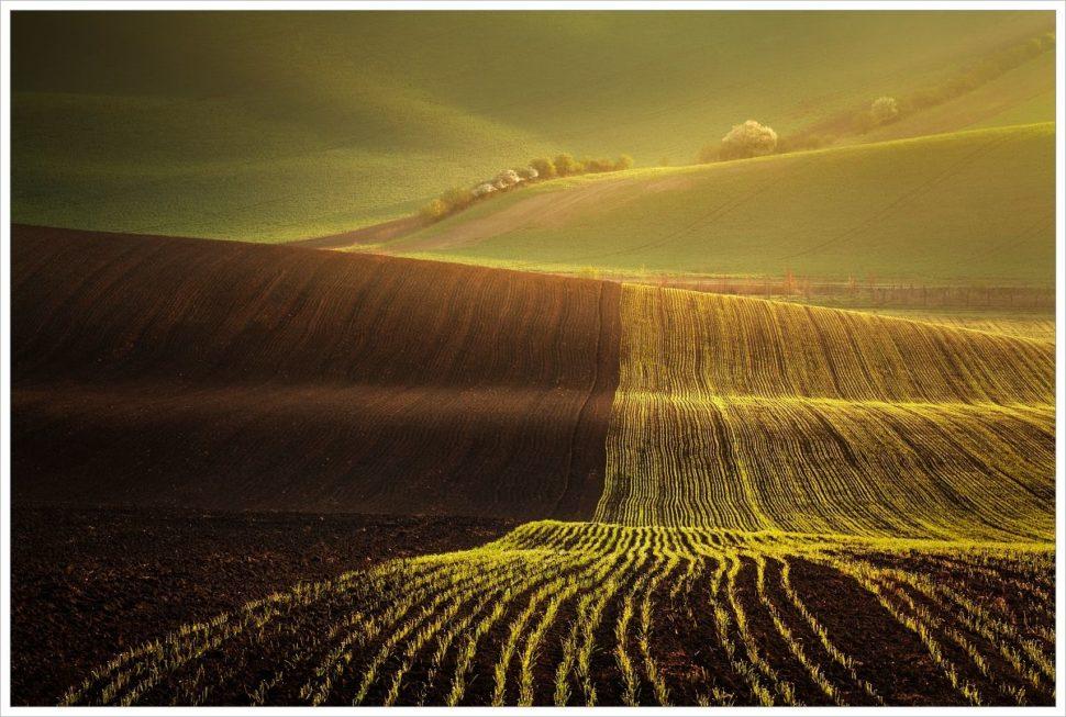 Ranní pohoda ve zvlněných polích Jižní Moravy - fotografický workshop Romanticky zvlněná Jižní Morava