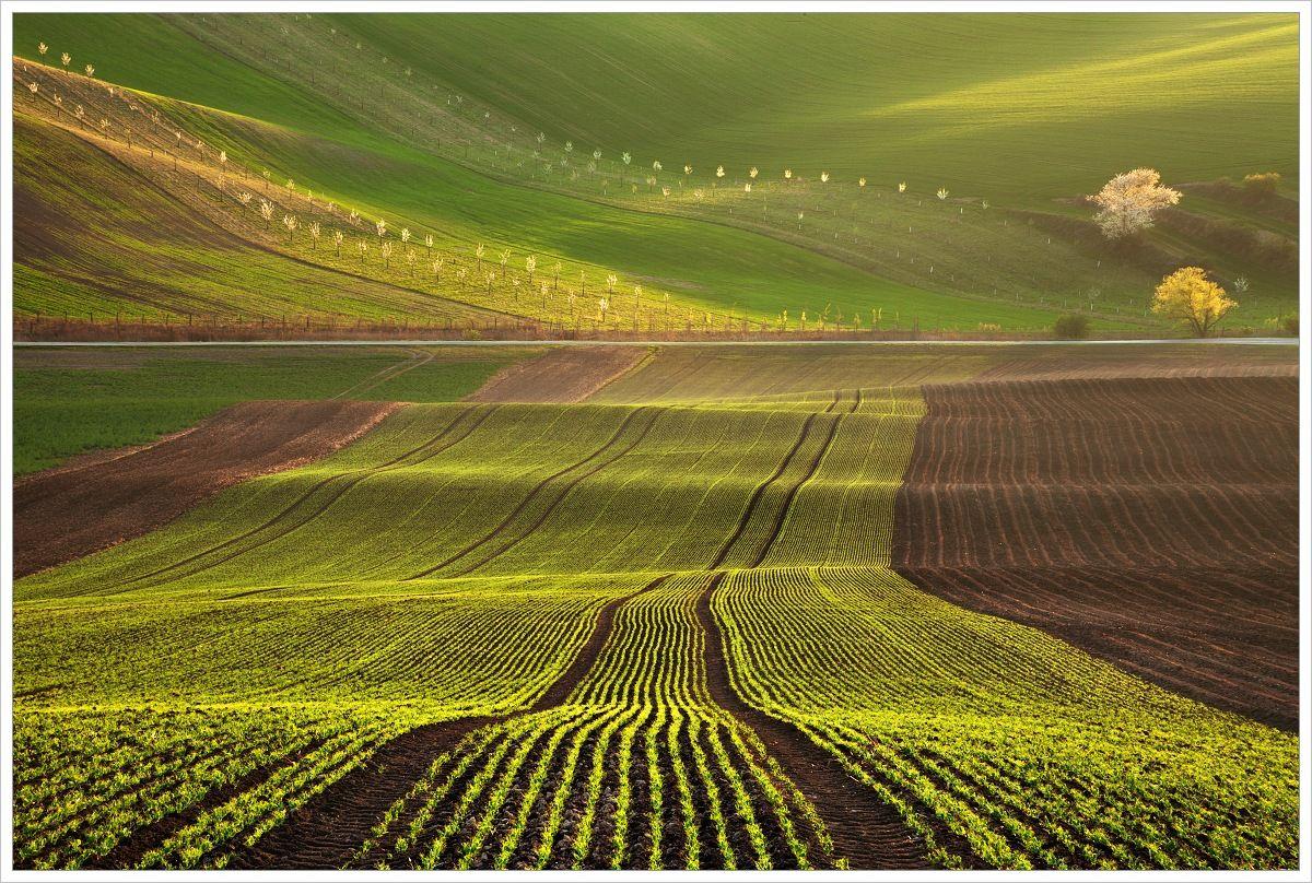 Linie Jižní Moravy - fotografický workshop Romanticky zvlněná Jižní Morava