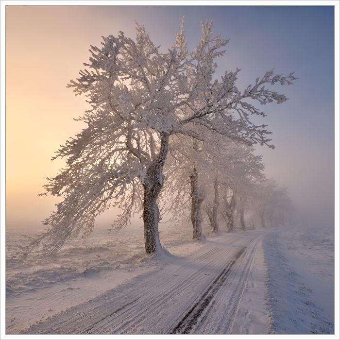 Zimní alej vKrušných horách - fotografický workshop Labské pískovce aKrušné hory