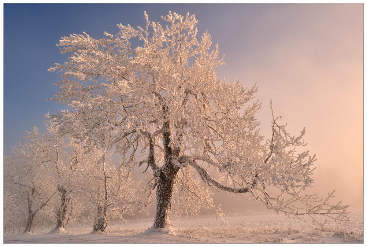 Zimní ráno vKrušných horách - fotografický workshop Labské pískovce aKrušné hory