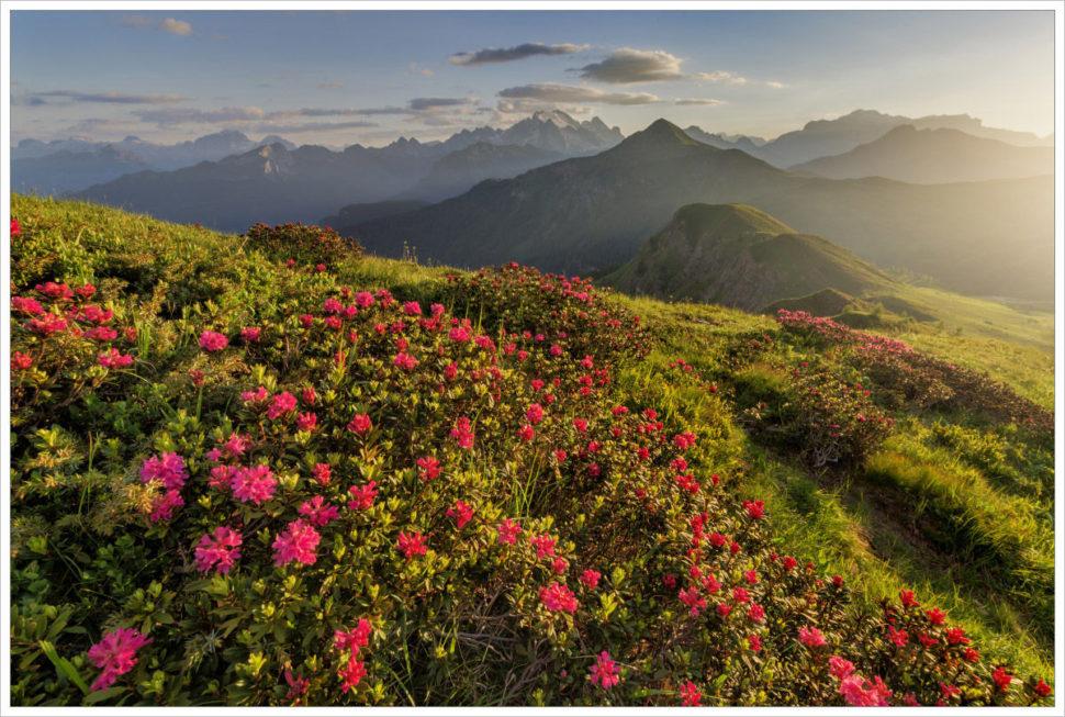 Rozkvetlé letní Dolomity vPasso Giau - fotografický workshop Rozkvetlé letní Dolomity
