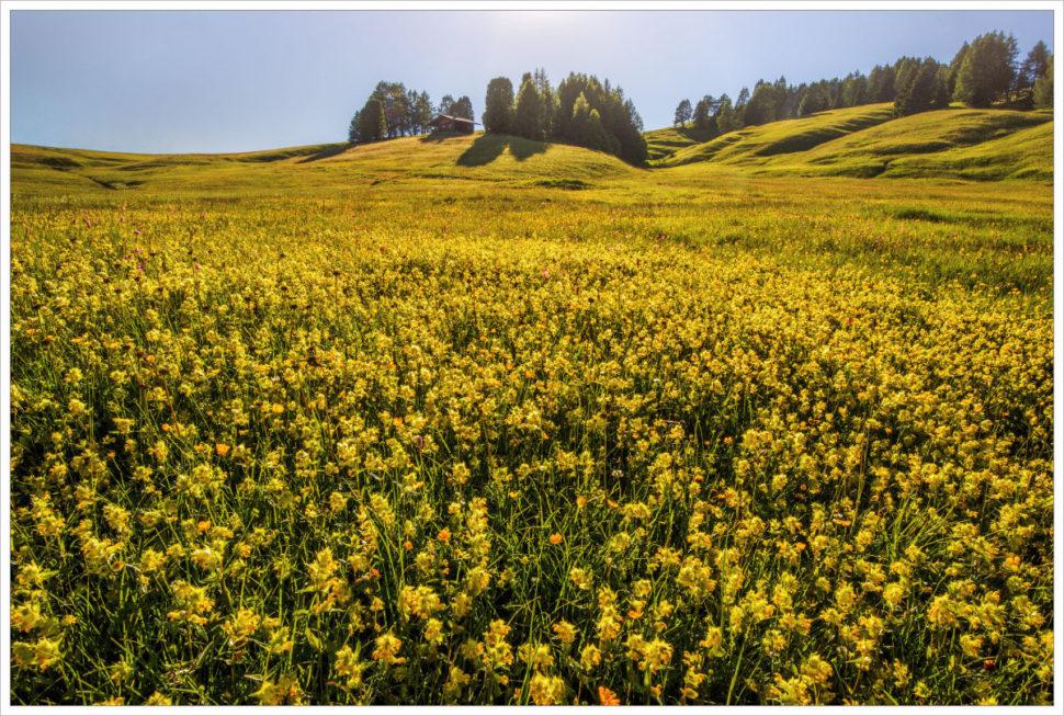 Rozkvetlé louky naAlpe di Siusi - fotografický workshop Rozkvetlé letní Dolomity