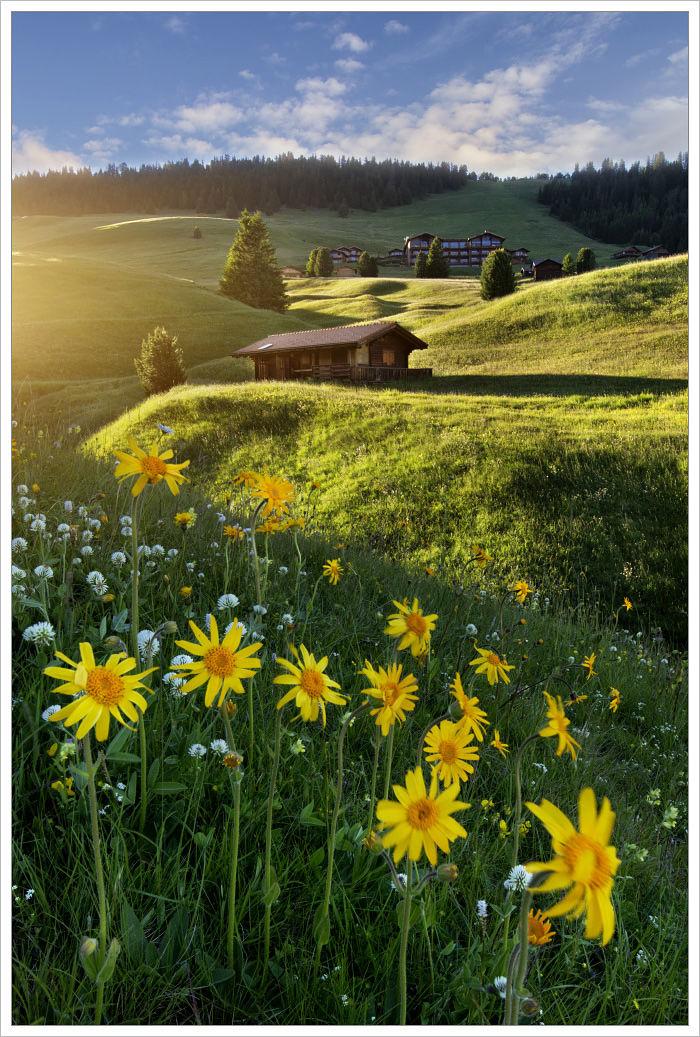 Rozkvetlé alpské louky naAlpe di Siusi - fotografický workshop Rozkvetlé letní Dolomity