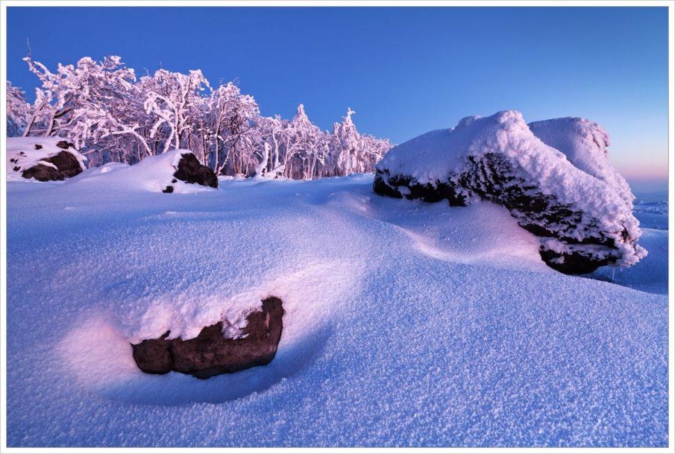 Modrá hodinka nastolové hoře Děčínský Sněžník - fotografický workshop Labské pískovce aKrušné hory