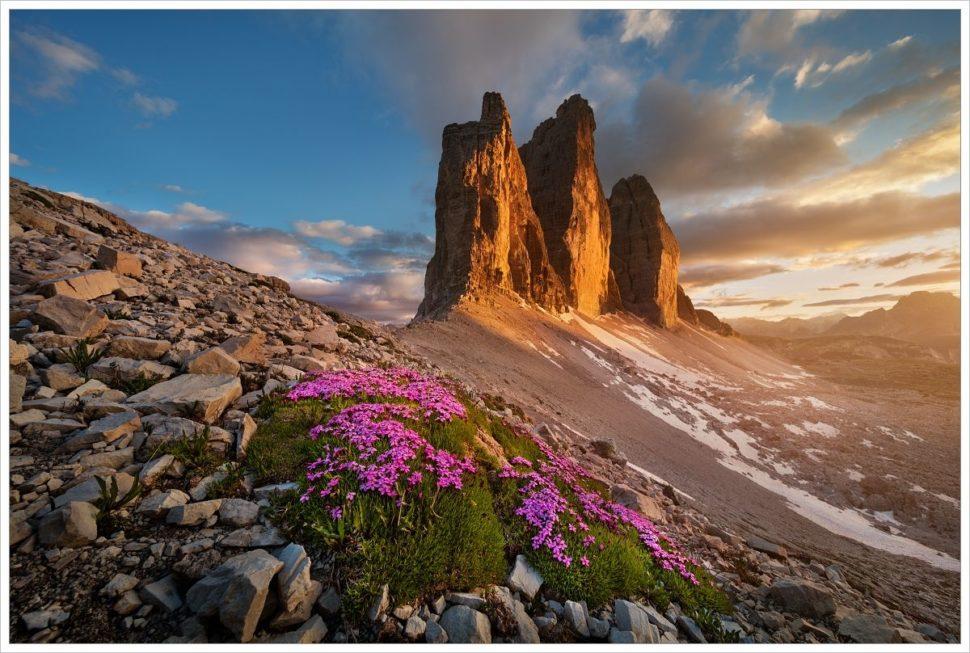 Rozkvetlé vysokohorské skalničky uTre Cime di Lavaredo vposledním večerním světlu - fotografický workshop Rozkvetlé letní Dolomity