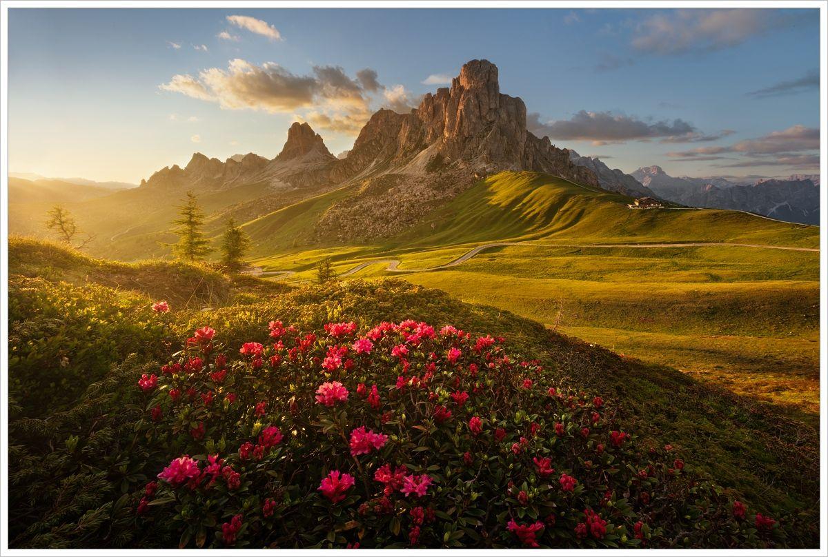 Rozkvetlé Azalky vprůsmyku Passo Giau - fotografický workshop Rozkvetlé letní Dolomity
