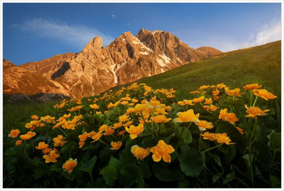 Rozkvetlý trs blatouchů vprůsmyku Passo Giau - fotografický workshop Rozkvetlé letní Dolomity