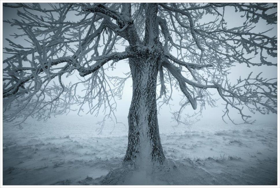 Omrzlý strom nahorských pláních Krušných hor - fotografický workshop Labské pískovce aKrušné hory