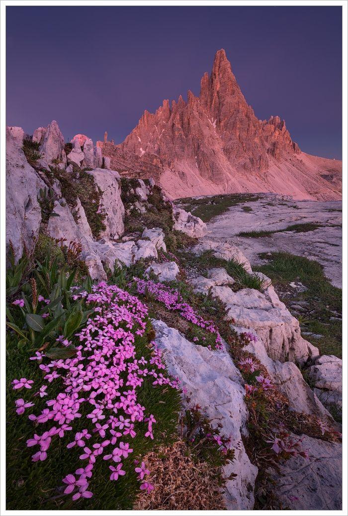 Monte Paterno s rozkvetlými skalničkami v popředí při modré hodince - fotografický workshop Rozkvetlé letní Dolomity