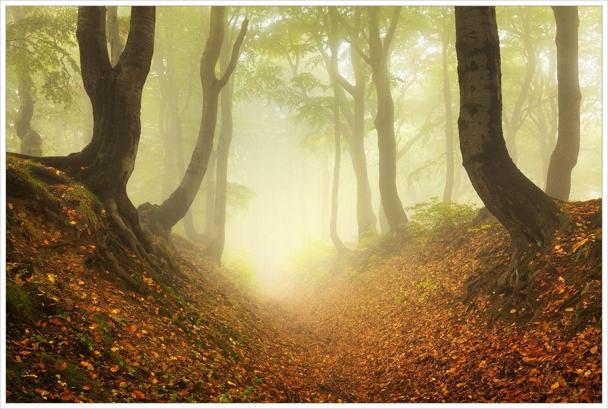 Fotografie mlhavého bukové lesa vKrušných horách spoužitým polarizačním filtrem