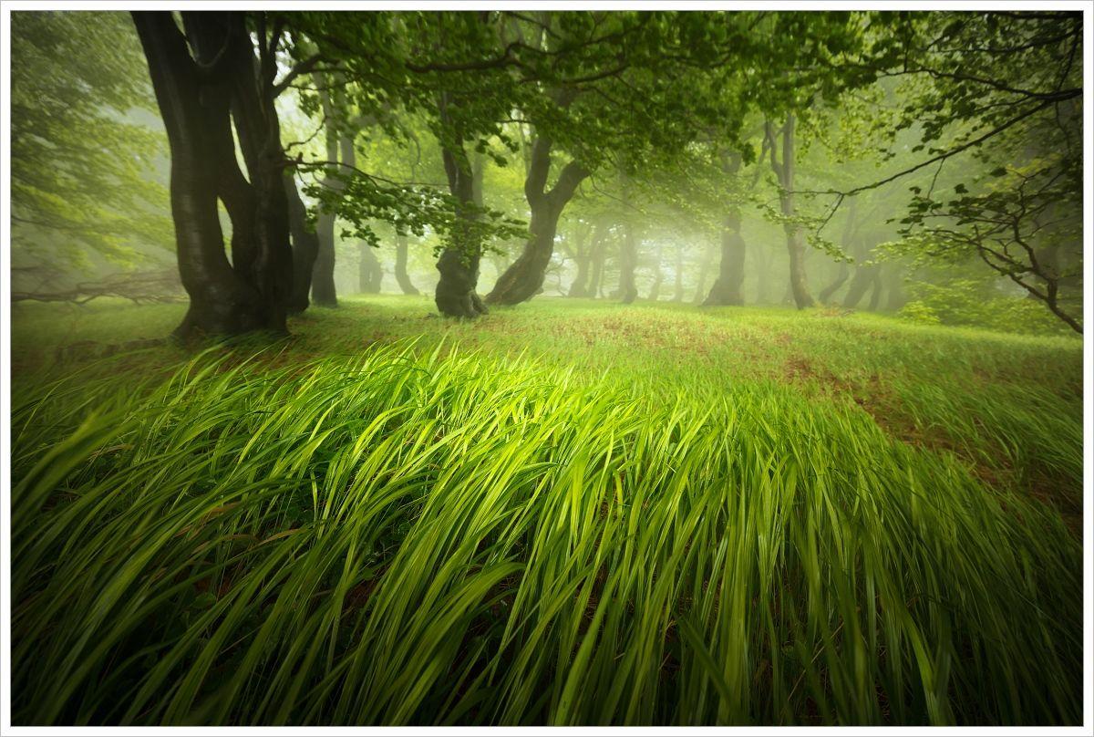 Krušné hory-letní bukový les krátce podešti