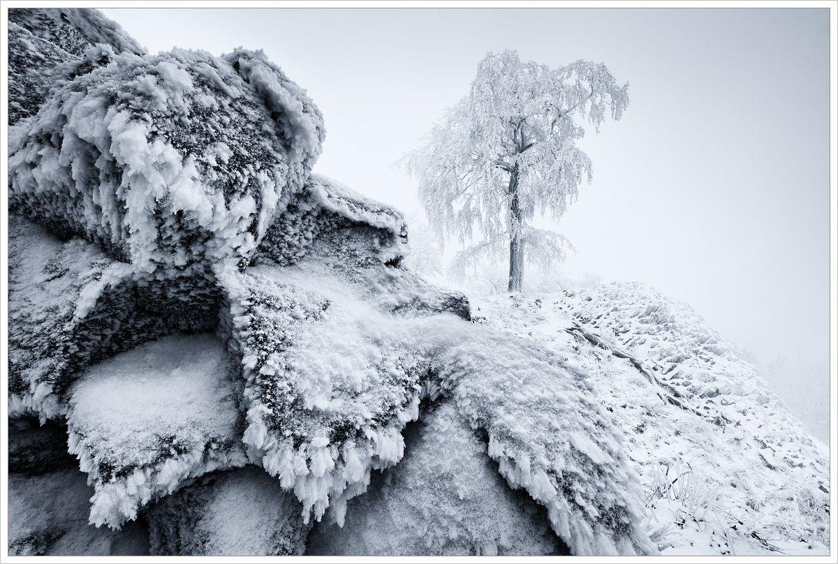 Lužické hory-mlhavá zimní krajina somrzlými čedičovými kameny vpořpedí