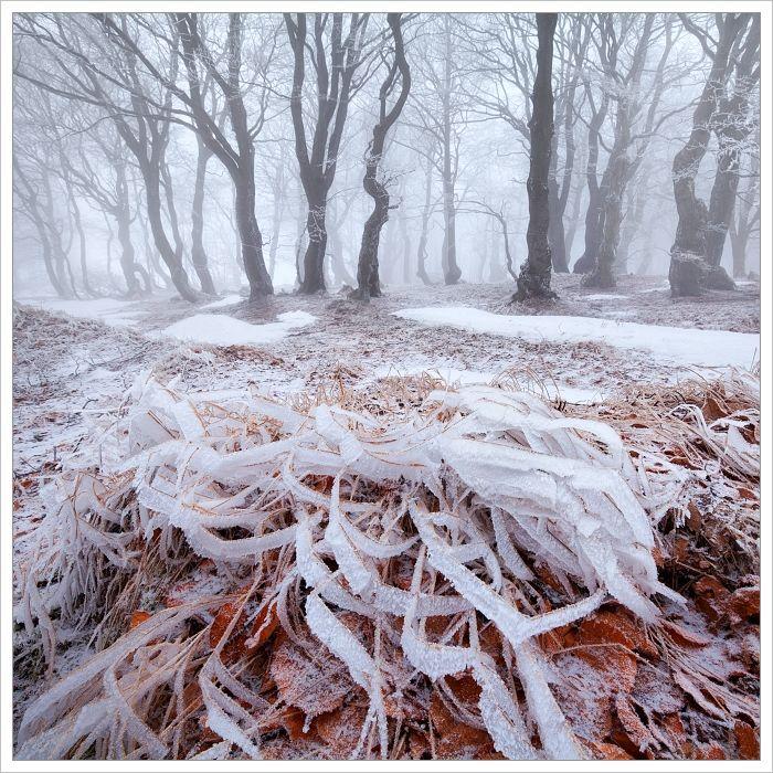 Krušné hory - mlhavý bukový les sprvním sněhovým popraškem anamrzlou trávou vpopředí
