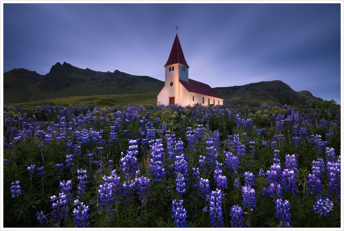 Island-pohled naIslandský kostelík sfialovými květy vpopředí